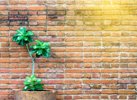 orange brick wall decorate with small plant