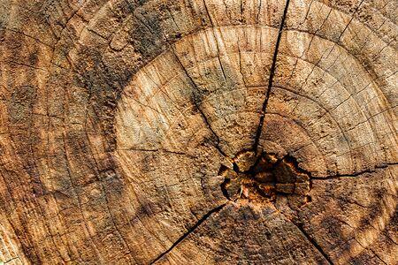 Surface bark texture close up as a background Reklamní fotografie
