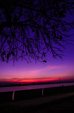 sunup: Silhouette of tree at sunrise