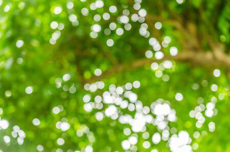 defocus: defocus of light blur background