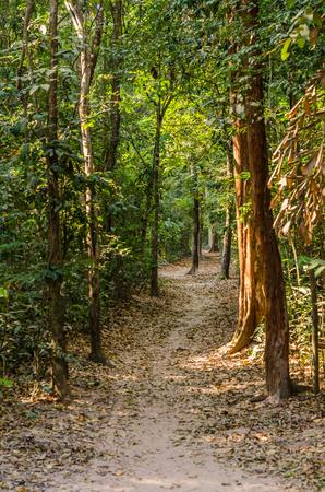 trekking trail in the rainforest,Laos Stock Photo
