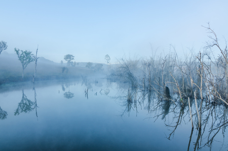 marsh with dried tree and reflecting from surface water in the morning Stock Photo