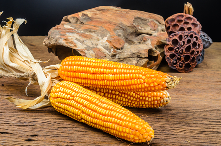 Dried corn on wooden board,agriculture product