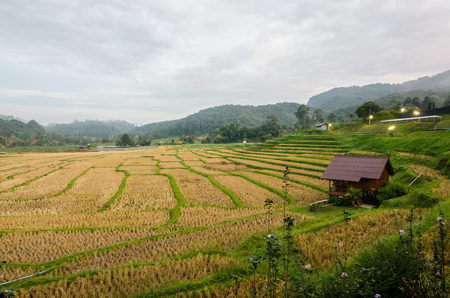 rice terrace at the north of Thailand