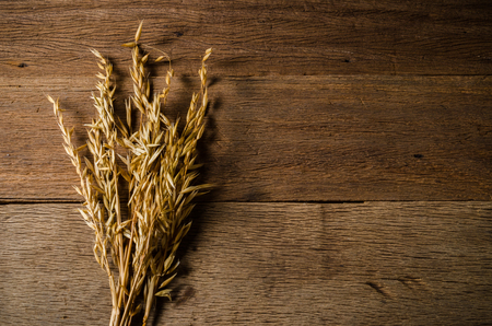ear of oat grain on wooden board background, agriculture product