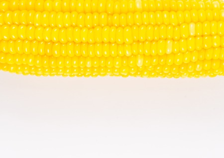 boiled corn isolated on white background ,agriculture product
