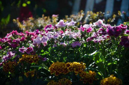 flowers in thai2 photo