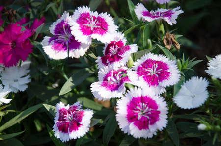 flowers in thai3 photo