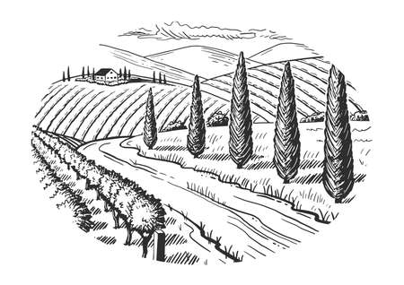 Rural landscape. Grape fields. Cypress trees. Hand drawn sketch. Vintage style. Black and white vector illustration isolated on white background.