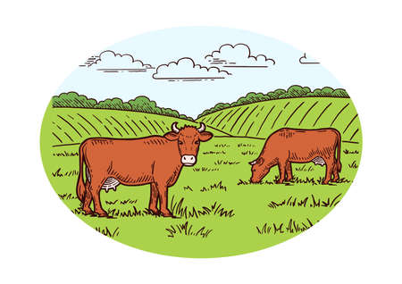 Rural landscape. Cows graze in the meadow. Hand drawn sketch. Vintage style. Color vector illustration.