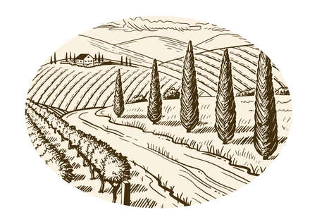 Rural landscape. Grape fields. Cypress trees. Hand drawn sketch. Vintage style. Vector illustration isolated on color background. Vettoriali