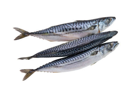 Top view of frozen mackerel isolated on white Imagens