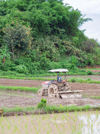 Tractor is plowing soil to prepare for cultivating rice. Northern, Thailand in the rain season, farmers start cultivating rice plants in the rice paddy field.