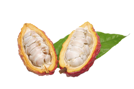 open cacao fruits