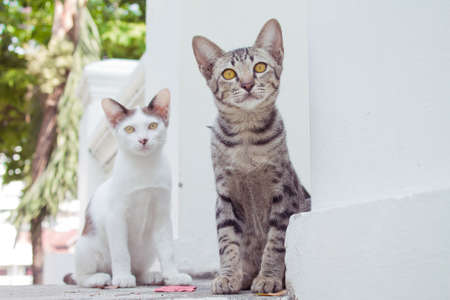 moggy: Curious cat Stock Photo