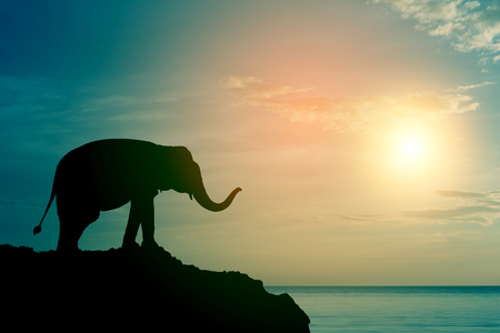 Elephant silhouette at sea (sunset time) Banco de Imagens