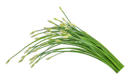 alliaceae: fresh chinese chives isolated on white Stock Photo
