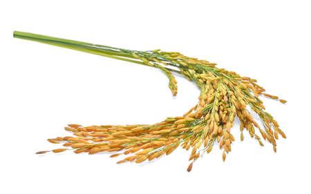 태국 재 스민 쌀 흰 배경에 고립의 귀 스톡 콘텐츠