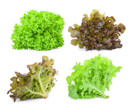 green and red oak lettuce isolated on white background