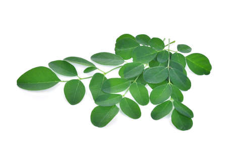 Moringa leaves isolate on white background Stock Photo
