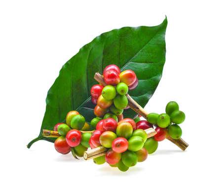 Koffie korrels en bladeren geïsoleerd op een witte achtergrond