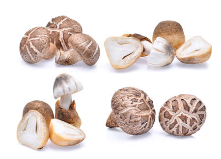shiitake mushrooms and straw mushrooms isolated on white Stock Photo