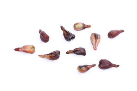 seed: grape seeds isolated on white background Stock Photo