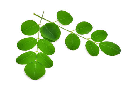 모 링가 잎, 흰색 배경에 고립 된 열 대 허브 스톡 콘텐츠
