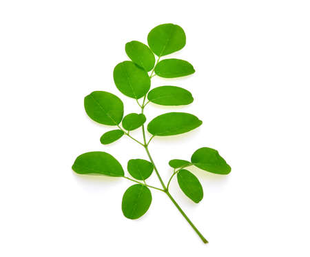 marango: branch of green moringa leaves,Tropical herbs isolated on white background