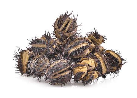 pile of dried Castor, Castor bean, Castor oil plant isolated on white background