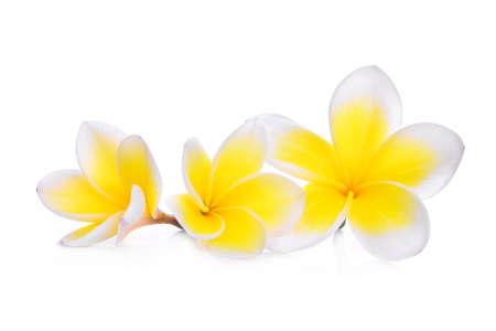 subtropical: white frangipani (plumeria) flower isolated on white background Stock Photo