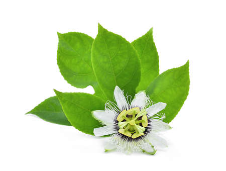 passion flower with green leaves isolated on white background Stock Photo