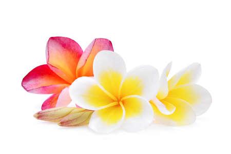 흰색과 핑크 frangipani (plumeria) 꽃 흰색 배경에 고립