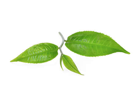 green tea leaf ilsolated on white background