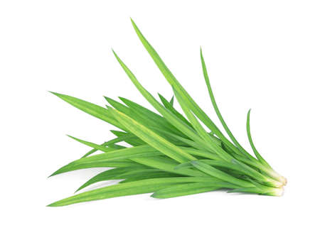 fresh green pandan leaves isolated on white background, Asian herbs