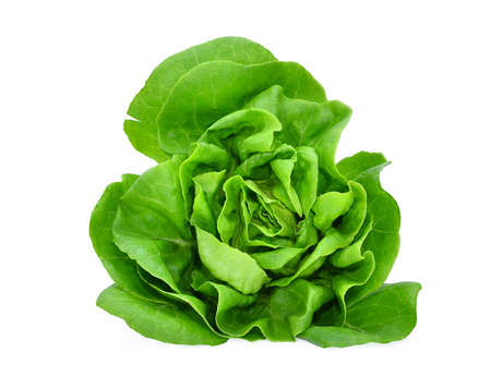 green butter lettuce vegetable or salad isolated on white back ground Stock Photo