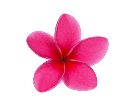 Single red frangipani isolated white background