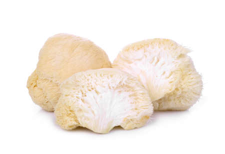 mokey head mushroom , lion mane or yamabushitake isolated on white background