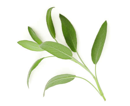 sage leaf isolated on white background, top view, flat lay Stock fotó