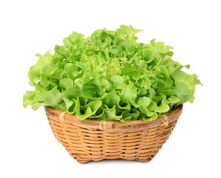 fresh green oak lettuce in the bamboo basket isolated on white background Фото со стока