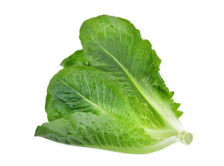 fresh baby cos, green lettuce isolated on white background