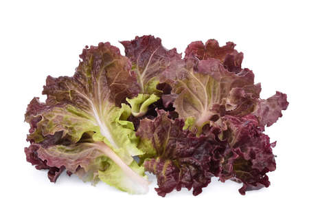 fresh red coral salad or red lettuce isolated on the white background