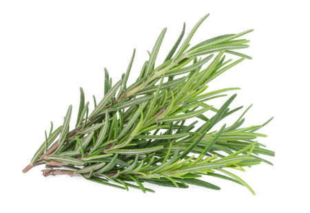twig of fresh rosemary isolated on white background