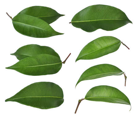 set di foglia verde isolato su sfondo bianco