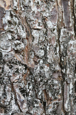 bark natural tree close up photo