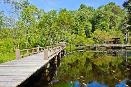 turba: Puente de madera a trav�s de turbera Foto de archivo