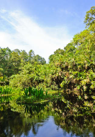 morass: Peat swamp forest in Thailand Stock Photo