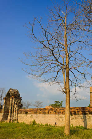 Dry tree and temple wall photo
