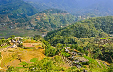 rice plant: Mountain view of rice terraced field in Sapa, Vietnam Stock Photo