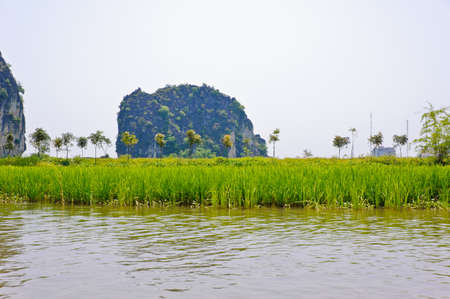 Rice field along river in Tam Coc, Vietnam photo